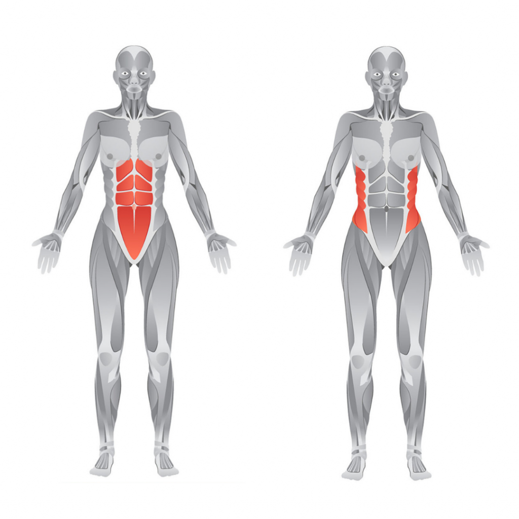 abs and obliques anatomy
